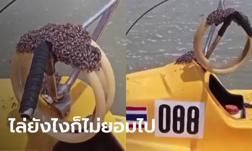 เรื่องแปลกก่อนหวยออก ผึ้งเกาะเรือสกู๊ตเตอร์ คนขับไหว้แม่ย่านาง ผึ้งหาย!